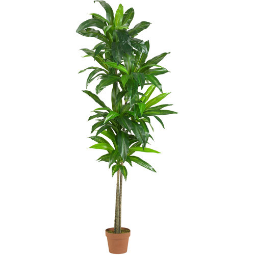 Nearly Natural 6' Dracaena Silk Plant, Real Touch Feel