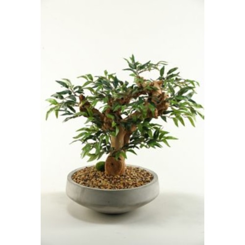 D & W Silks Ruscus Bonsai Tree in Planter