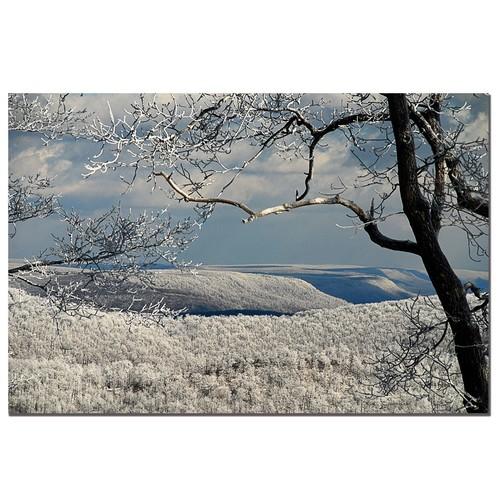 Trademark Global Lois Bryan 'Winter Scene' Canvas Art [Overall Dimensions : 18x24]