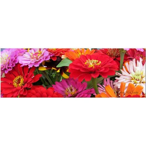 Kathie McCurdy 'Zinnia Frieze' Canvas Art