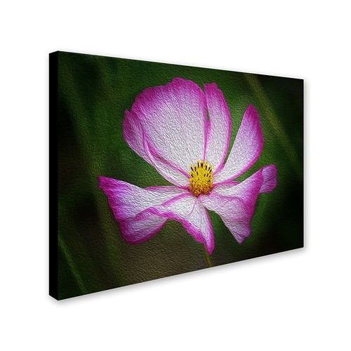 Valentine's Day by Philippe Sainte-Laudy, 22 by 32-Inch Canvas Wall Art [22 by 32-Inch]