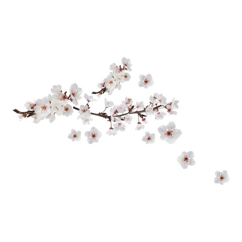 Brewster 19.7 in. x 12.2 in. Photographic Blossom Wall Decal