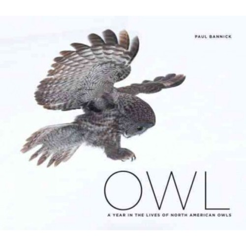 Owl: A Year in the Lifes of North American Owls (Hardcover)
