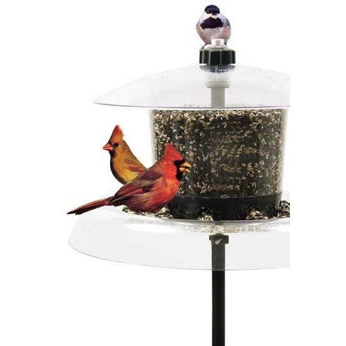 Droll Yankees Inc The Jagunda Squirrel Proof Bird Feeder With Auger Built-In Seed Valve