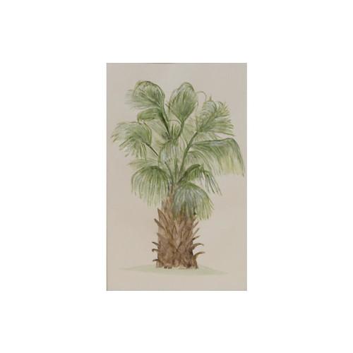 Chinese Fan Palm, C. 1940