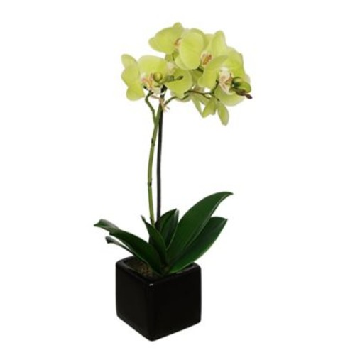 House of Silk Flowers Artificial Baby Orchid Flowers in Pot; Citrus Green