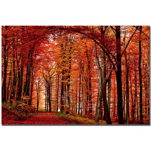 The Red Way by Philippe Sainte-Laudy, 14x19-Inch Canvas Wall Art [14 by 19-Inch]