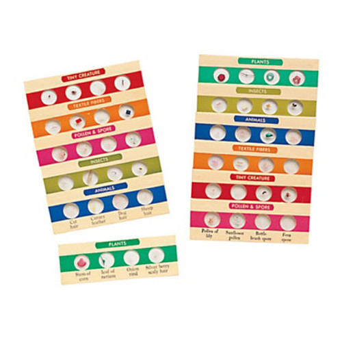 Learning Resources Prepared Microscope Slides, 4 1/2