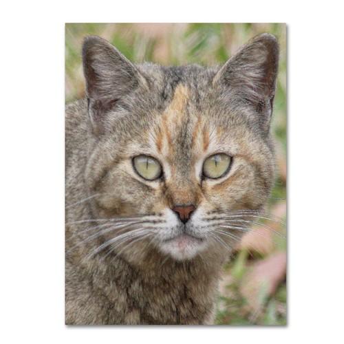Trademark Fine Art 'Pretty Kitty' 14