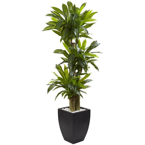 Nearly Natural Indoor Corn Stalk Dracaena with Black Wash Planter