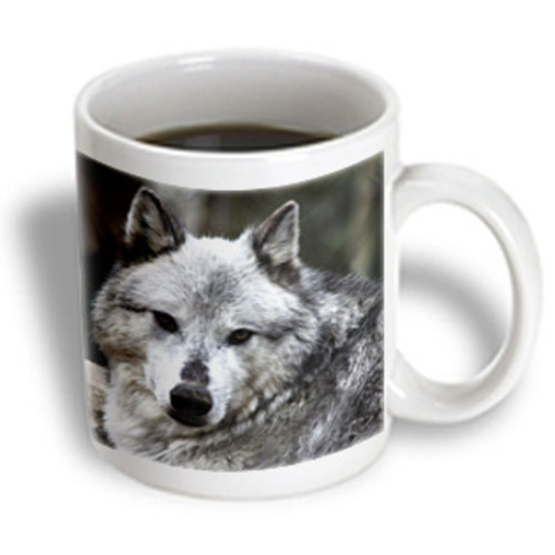 3dRose - WhiteOak Photography Wolves - Gray Wolf looking straight at you - 11 oz mug