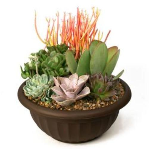 Succulent Garden Plant-Your-Own Kit