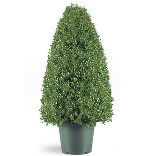 National Tree Company 36