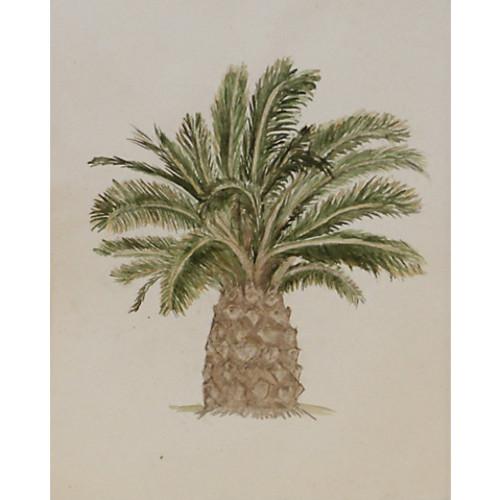 Campbell's Melange Palm, C. 1940