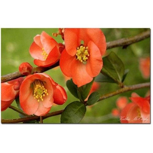 Quince by Kathie McCurdy, 14x19-Inch Canvas Wall Art [14 by 19-Inch]