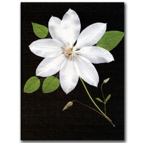 Trademark Fine Art Gallery Wrapped Canvas Kathie McCurdy 'Star' Canvas Wall Art [option : 14x19 Wrapped Canvas Art]