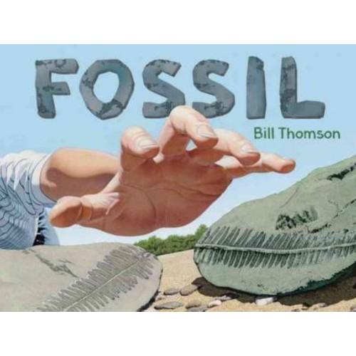 Amazon Childrens Pub Fossil