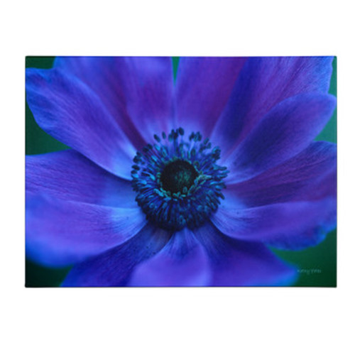 'Beautiful Anemone' by Kathy Yates Framed Photographic Print on Wrapped Canvas