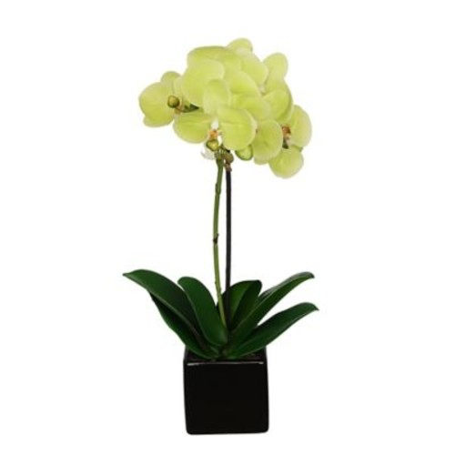 House of Silk Flowers Artificial Baby Cube Ceramic Orchid Flowers in Pot (Set of 2); Citrus Green