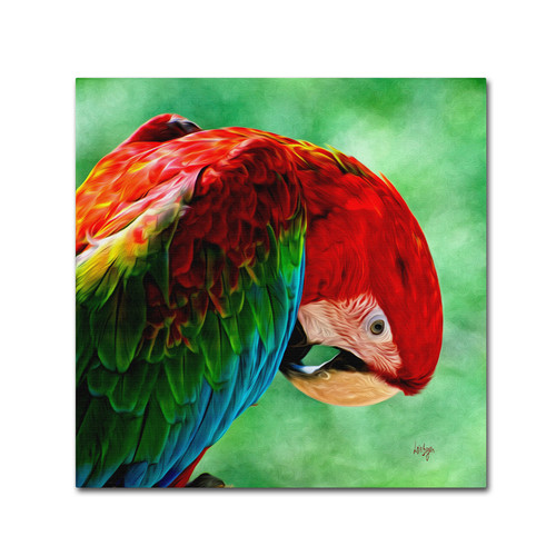 Trademark Global Lois Bryan 'Colorful Macaw Square Format' Canvas Art [Overall Dimensions : 14x14]