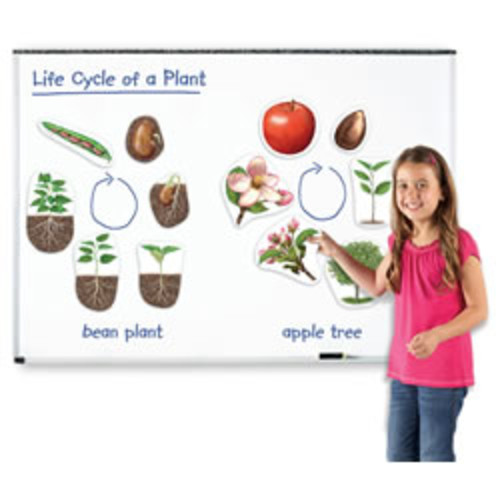 Giant Magnetic Plant Life Cycle
