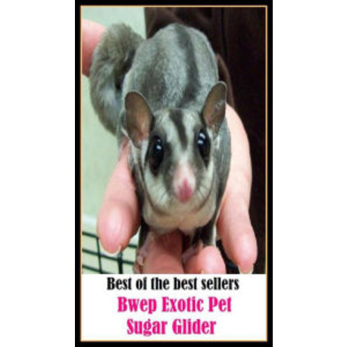 Best of the best seller Bwep Exotic Pet Sugar Glider ( ambrosia, wampum, artificial sweetener, treacle, baby, the needful, blackstrap, sweets, boodle, sweetie, bread, sweetening, buttercup )