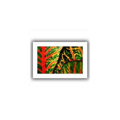 Artwal Croton Abstract Unwrapped Canvas Art by Kathy Yates, 16 x 24 Inch