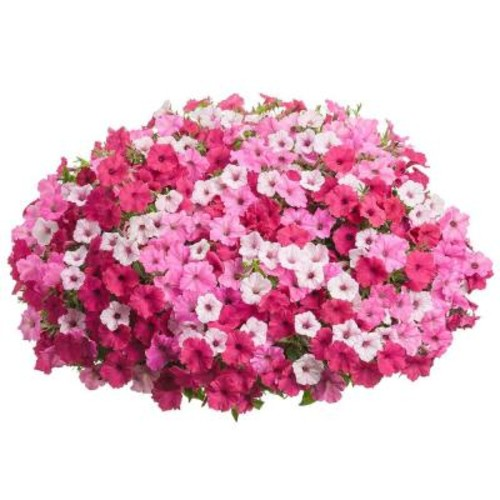 Proven Winners DIY Premium Hanging Basket Kit Above and beyond Combination with 15 in. Container