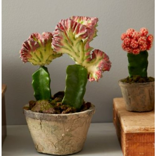 Nearly Natural 2 Piece Colorful Cactus Garden Set in Planter