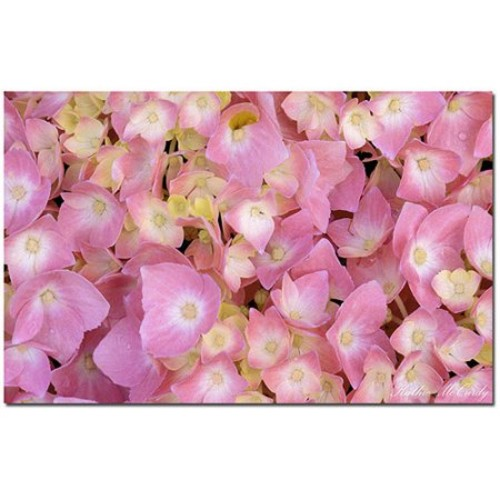 Pink Hydrangea by Kathie McCurdy, 14x19-Inch Canvas Wall Art [14 by 19-Inch]
