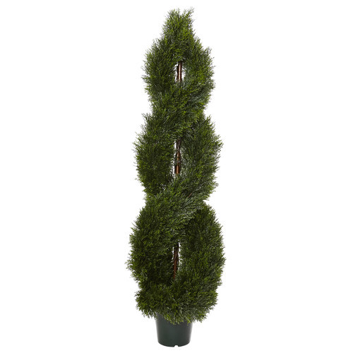 Pond Cypress Spiral Topiary in Pot
