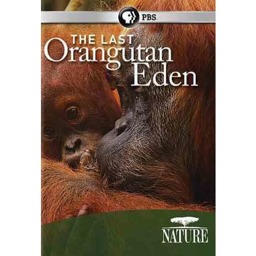 Nature: The Last Orangutan Eden (DVD)