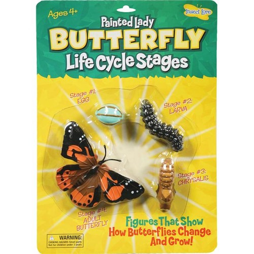 Insect Lore Ilp4760 Butterfly Life Cycle Stages