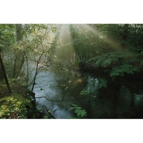 Brewster Home Fashions National Geographic Forest Stream with Sunbeams 72' x 48'' Wall Mural