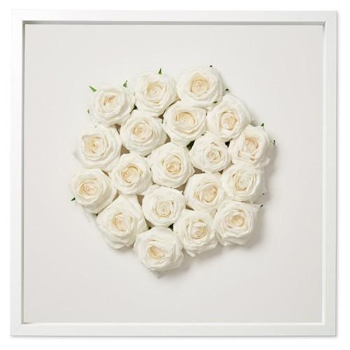Dawn Wolfe, White Bridal Roses