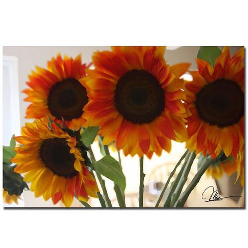 Trademark Global Martha Guerra 'Sunflowers VIII' 16