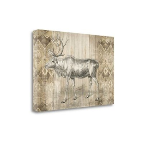 Tangletown Fine Art 'Natural History Lodge IX' by Wild Apple Portfolio Graphic Art on Wrapped Canvas