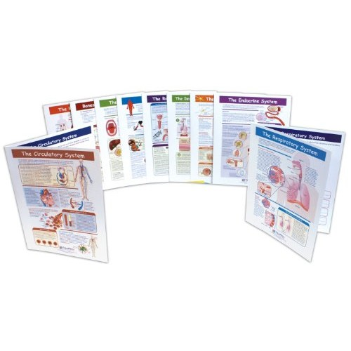 Path Learning Human Body Visual Learning Guide Set, Grade 6-10