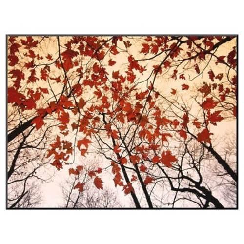 Art.com Red Maple and Autumn Sky by Raymond Gehman - Mounted Print
