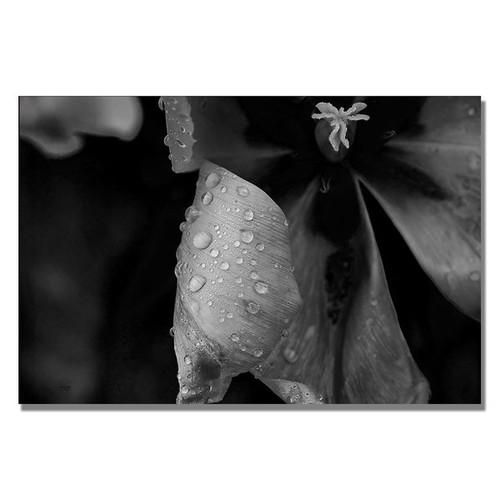 Lois Bryan 'Tulip in the Rain B&W' Canvas Art [option : 22x32 Wrapped Canvas Art]