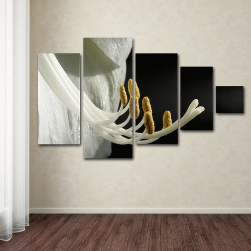Trademark Fine Art ''Intimate Amaryllis'' 5-pc. Wall Art Set