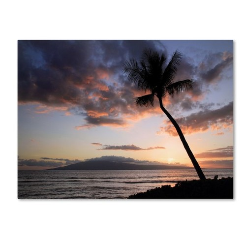 'Palm Tree Maui' by Pierre Leclerc Framed Photographic Print on Wrapped Canvas