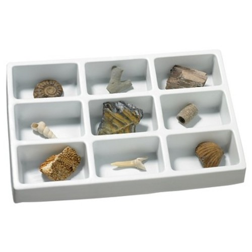 Educational Insights Fossils Collection