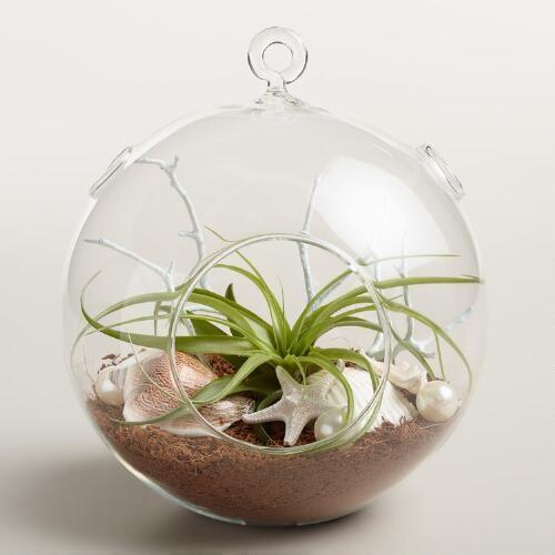 Hanging Live Plant Glass Terrarium with Starfish