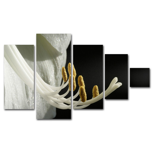 Trademark Global Kurt Shaffer 'Intimate Amaryllis' Multi Panel Canvas Art Set