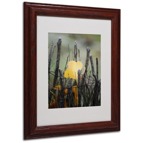 Prisoner Fall Canvas Wall Art by Philippe Sainte-Laudy, Wood Frame, 11 by 14-Inch [11 by 14-Inch]