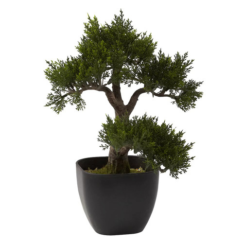 nearly natural Cedar Bonsai