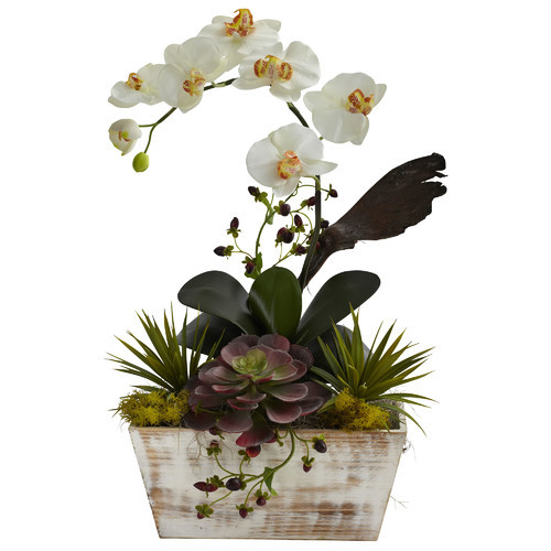 Orchid and Succulent Garden Desk Top Plant in Planter