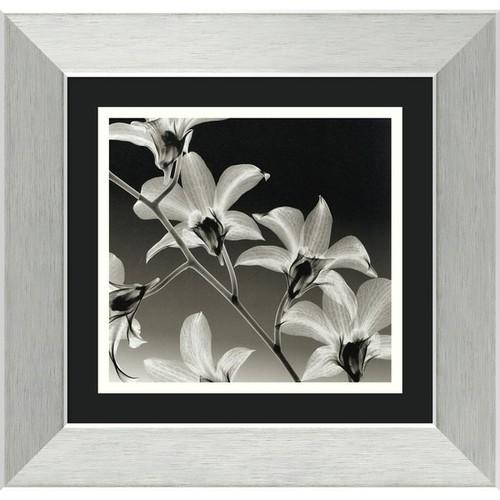 Framed Art Print 'Orchid Denrobium' by Steven N. Meyers 15 x 14-inch