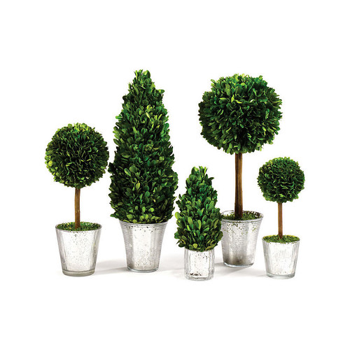 Mercury Glass Preserved Topiaries, Green/Silver
